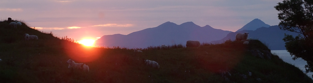 Sheep in Sunset Ardnamurchan Scotland